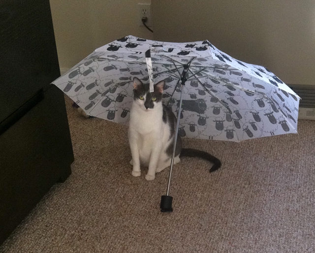 Puss Umbrella1 My Cat Is A Star!!!