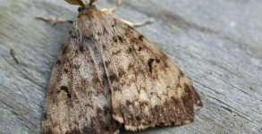 What a gay moth.