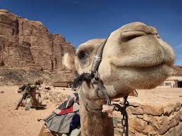 camel The Camel Conundrum and Why Fundies Hate Science