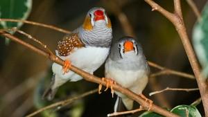 gay birds