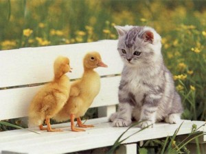 The post we're critiquing isn't about anything, so here is a picture of a kitten looking at some ducks.
