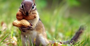 You are neither a squirrel nor a homosexual, according to some wingnut Porno Pete likes.
