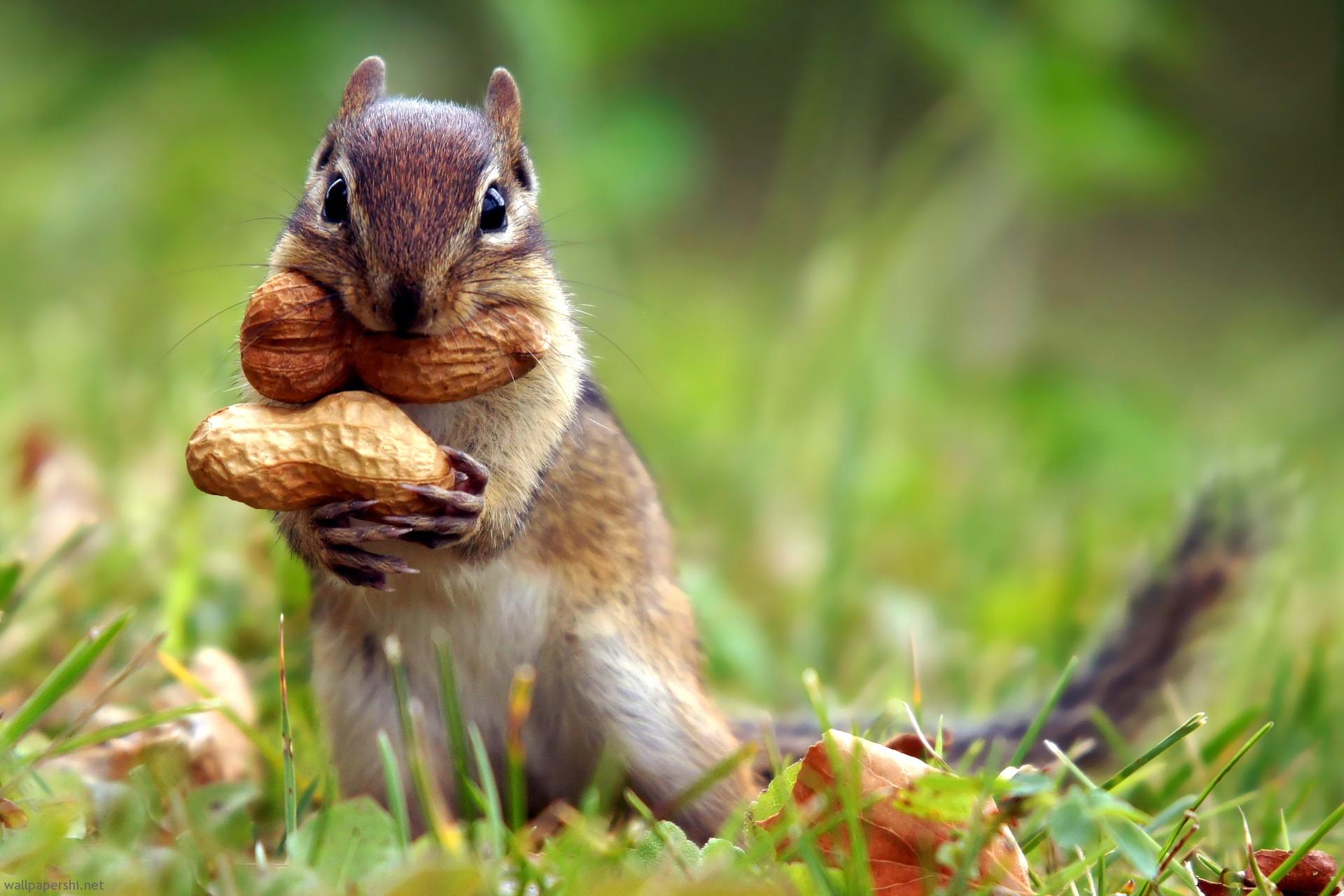 Gay squirrels